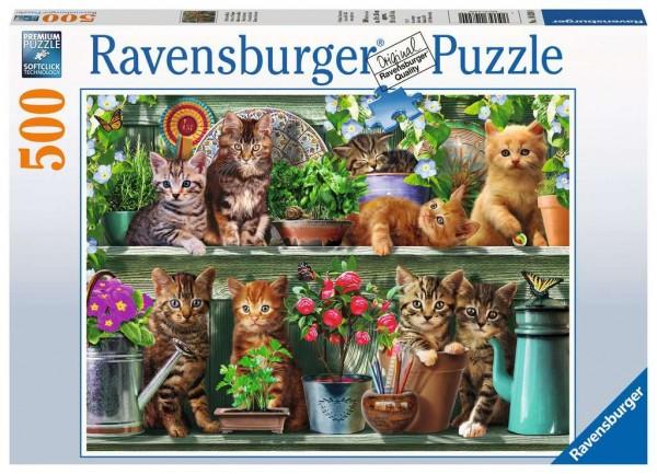 Katzen im Regal