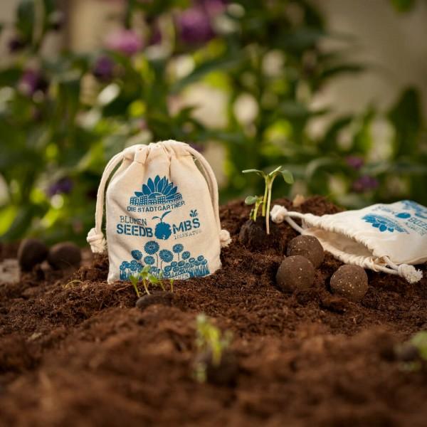 Seedbombs Gänseblümchen